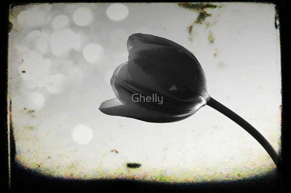 Tulip solo by Ghelly