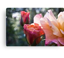 Roses In Bloom Canvas Print