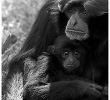 Siamang Gibbon & Baby  by Mark Lyons