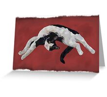 Zorro is watching - Red Greeting Card