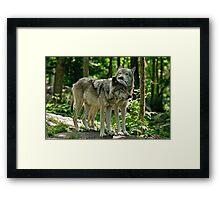 Whisper Sweet Nothing - Timberwolves  Framed Print