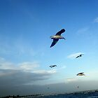 Seagulls ~ Altona Beach ~ Victoria by Margaret Walker
