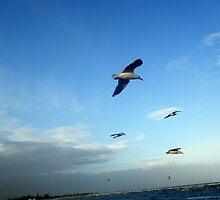 Seagulls ~ Altona Beach ~ Victoria by wyvernsrose