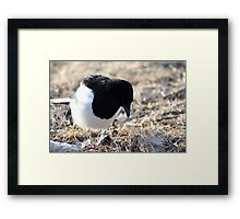 Looking for Goodies Framed Print