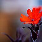 orange blossom by Bill vander Sluys