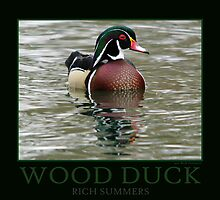 Wood Duck Poster by Rich Summers