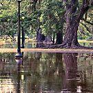 Rain Soaked Audubon by RayDevlin