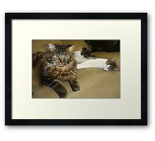 This is the Last Time I Kitten-Sit...So Don't Ask Me Again!! Framed Print