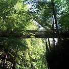 Tree Bridge by WickedJuggalo
