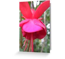 Red Bell Flower Greeting Card