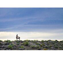 King of the Desert Photographic Print