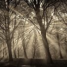 monochrome forest I by LarsvandeGoor