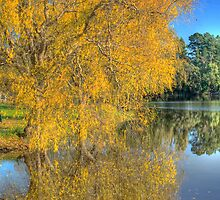 Autumn Reflections by Vickie Burt