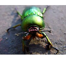 Weird and Freaky!  Only a Mother could Love! Photographic Print