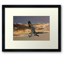 Talons First Framed Print