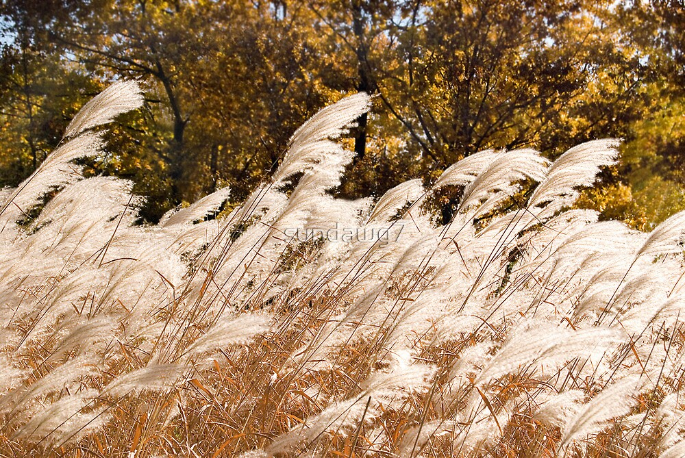 Pampas Crescendo by sundawg7