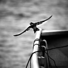 Swallow in Flight - B&W by Colonel-Herro