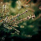 Needles in the Bokeh by fabiela