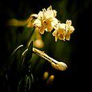 Spring Spotlight by fabiela