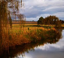 Willows - Felton Valley, Darling Downs Qld by Lorraine Seipel
