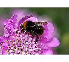 Early bumble bee Photographic Print