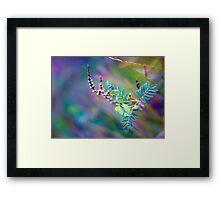 Angophora australis Framed Print