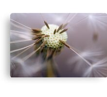 Pin Cushion Canvas Print