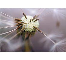 Pin Cushion Photographic Print