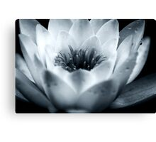 Water Lily Centre (black and white) Canvas Print