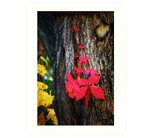 Autumn Vine Art Print