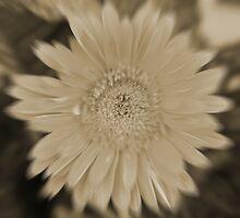 Gerbera Blur (Best Viewed Large) by Stephen Horton