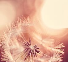 Pure Sunshine Dandelion Wishes by alyphoto