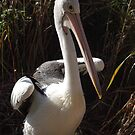 Pelican near the water by lettie1957