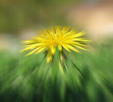 Backyard Blur (Best Viewed Large) by Stephen Horton