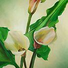 Three Calla Lilies by taiche