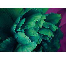 Green Peony Photographic Print