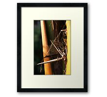 Very abstract spider Web Framed Print