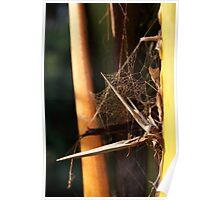 Very abstract spider Web Poster