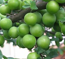 Who wants a few plums? by rasim1