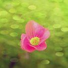 Flower by Ashley Christine Valentin
