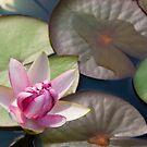 A Pretty Pond by Regenia Brabham
