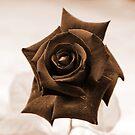Brown Rose by Igor Shrayer