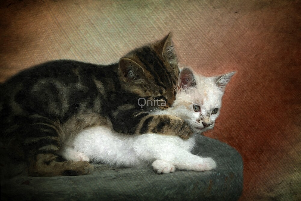 Kittens at play: Huggies and Pampers...  by Qnita