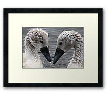 Two Cygnets, Hogganfield Loch, Glasgow, Scotland, UK, Europe. Framed Print