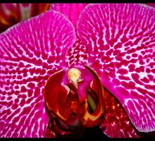 Pink Orchid On a Hot Tin Roof by Kristin  Long