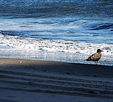 The Gull and the Blue by Kristin  Long