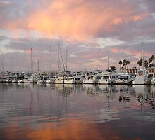 Marina del Rey shines by Waterlife