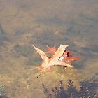 Leaves on the water by spirit01