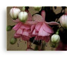 Pink Fuchsia on Paper Canvas Print