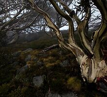 Charlotte Pass - Snow gums view 05 by Timothy Kenyon